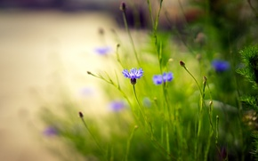 Picture flowers, nature, background
