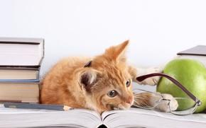 Picture cat, cat, books, Apple, red, glasses, lies, pencil