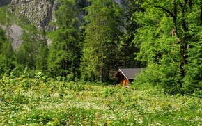 Picture forest, grass, trees, mountains, glade, house
