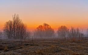Picture field, landscape, sunset, fog