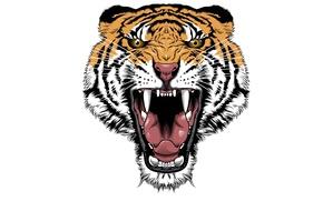 Picture tiger, minimalism, head, evil, tiger