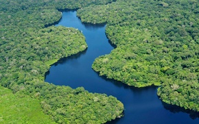 Picture forest, green, river, green, forest, river, beautiful, beautiful, Amazon