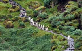 Picture Tasmania, Macquarie island, Australia, Royal penguins, The Pacific ocean