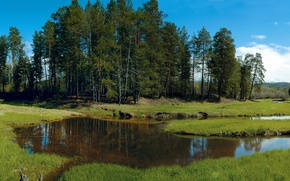Picture forest, grass, trees, stream, glade, Siberia