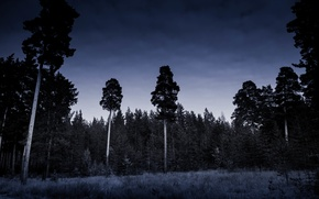 Picture Nature, Night, Forest, The darkness