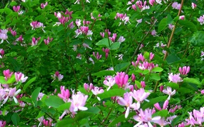 Picture flowers, background, Bush, Spring, cover, barberry