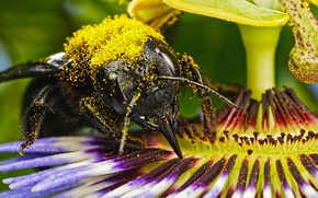 Picture flower, bee, pollen