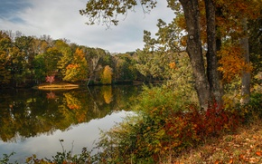 Picture autumn, forest, leaves, trees, lake, yellow, USA, Virginia, Lake Lanier, Martinsville