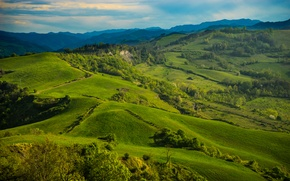Picture greens, grass, trees, hills, field, Italy, meadows, Tuscany, Tuscany