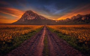 Picture road, field, the sky, mountains