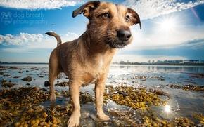 Picture beach, lake, each, shore, dog