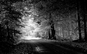 Picture road, trees, nature, black and white, Landscape