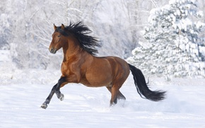 Picture winter, snow, Horse