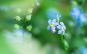 Picture field, grass, flowers, plant, petals, meadow