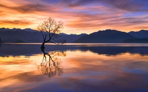 Picture reflection, sunset, mountains, lake, tree, the evening, New Zealand