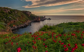 Wallpaper flowers, sea, landscape, nature, the sky, clouds, sunset