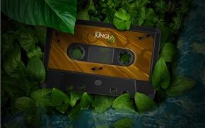 Picture greens, leaves, macro, foliage, plants, lizard, ants, jungle, cassette