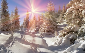 Wallpaper winter, forest, the sun, snow, tree, nature, winter, snow