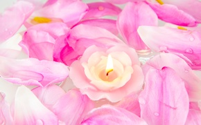 Wallpaper flowers, roses, candle, petals, pink