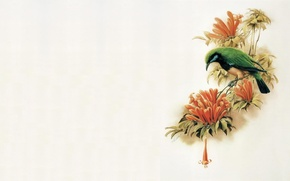 Picture flowers, bird, minimalism, branch, East, master, art, painting
