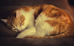 Wallpaper cat, white-red, stay, cat