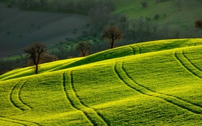 Picture field, landscape, morning