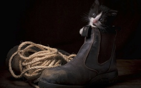 Picture kitty, rope, shoes