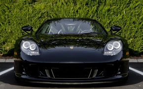 Picture trees, black, Porsche, before, Porsche, black, front, tree, carrera, Carrera