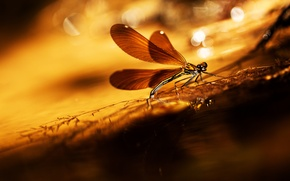 Picture glare, background, dragonfly, a blade of grass