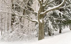 Picture winter, trees, belosnejnaya
