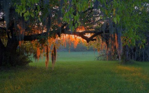 Picture forest, grass, trees, sunset, branches, glade