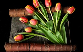 Picture leaves, flowers, stems, yellow, tulips, red, bark, black background, buds