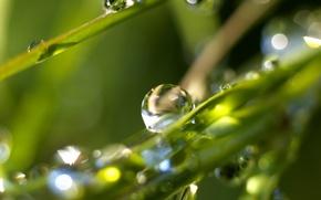 Wallpaper Rosa, morning, grass, drops