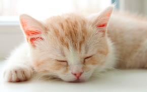Wallpaper kitty, sleep