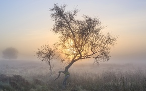 Picture nature, fog, tree, morning