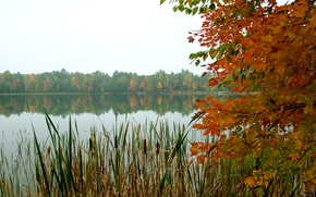 Picture autumn, forest, the sky, leaves, trees, lake, reed
