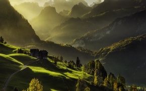 Picture forest, light, mountains, home