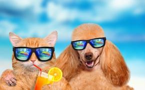 Wallpaper summer, cat, dog, vacation