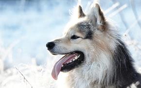 Picture language, snow, each, dog, dog