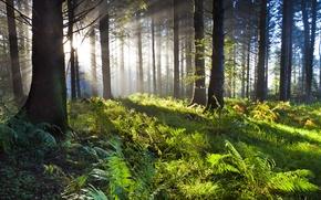 Wallpaper green, wood, sunrise