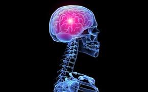 Picture glow, skeleton, x-ray, brain, skeleton, the glow of X-rays, the brain