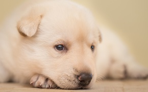 Picture macro, dog, puppy