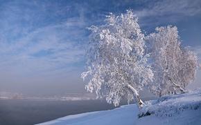 Picture winter, frost, snow, landscape, nature, lake