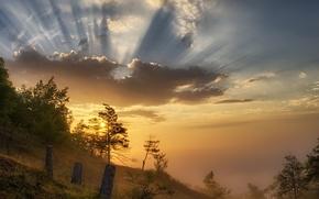 Picture light, nature, fog, morning