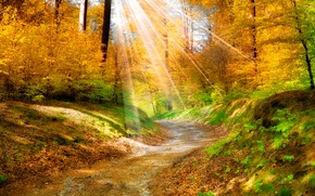Picture leaves, trees, landscape, nature, track, the sun's rays, Golden autumn, yellow. forest