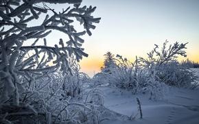 Picture winter, snow, landscape