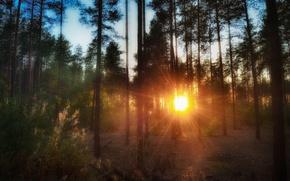 Picture forest, summer, landscape, sunset, nature, twilight