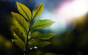 Wallpaper leaves, drops, macro, light, glare, branch, green