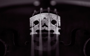 Picture macro, violin, strings
