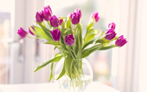 Picture flowers, bouquet, petals, tulips